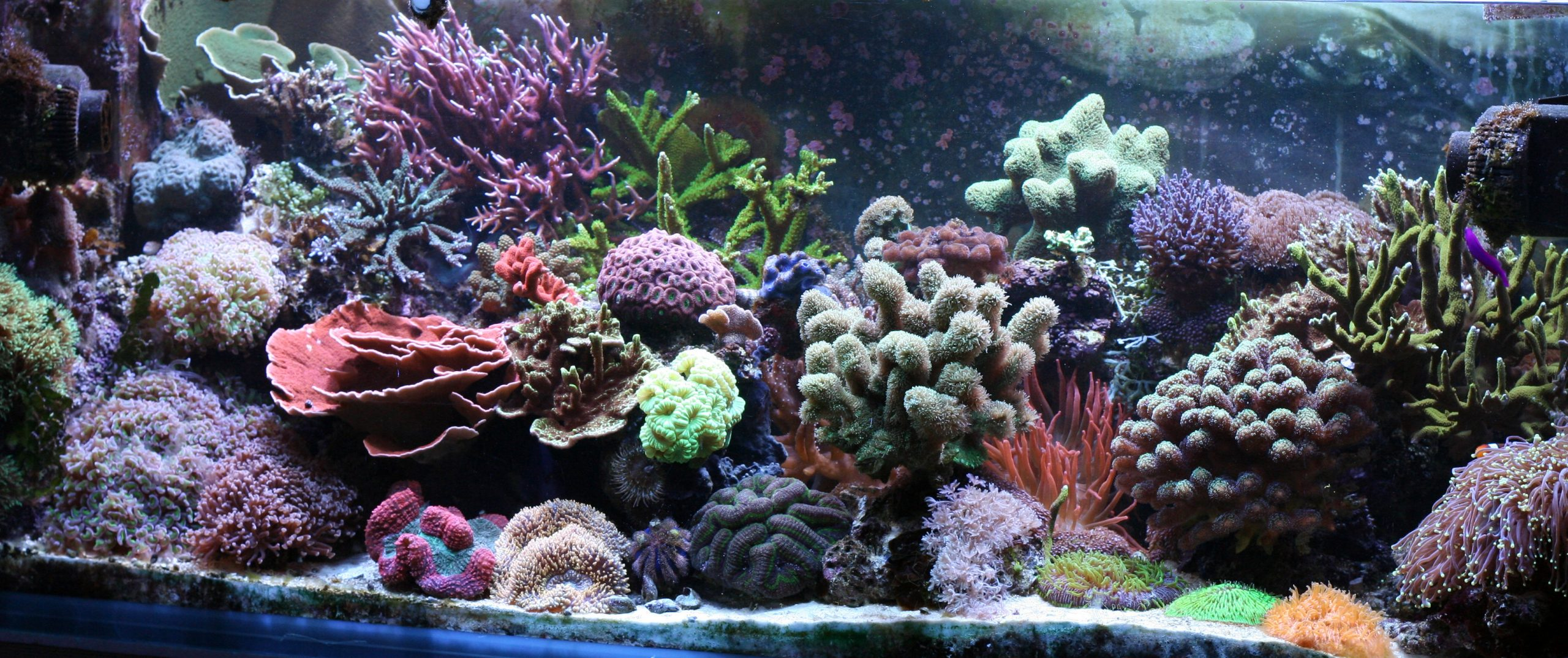 large fish tanks for sale