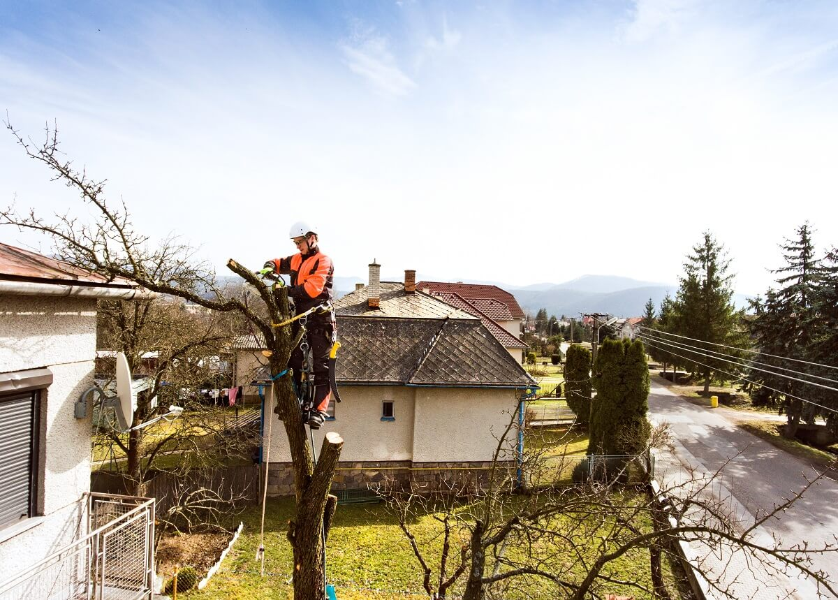 monster tree service franchise reviews