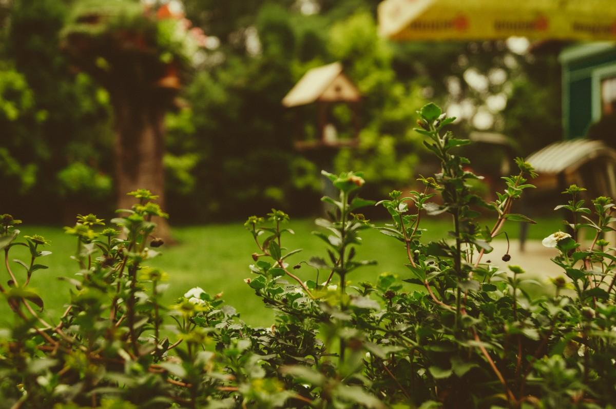 backyard-plant-mulching