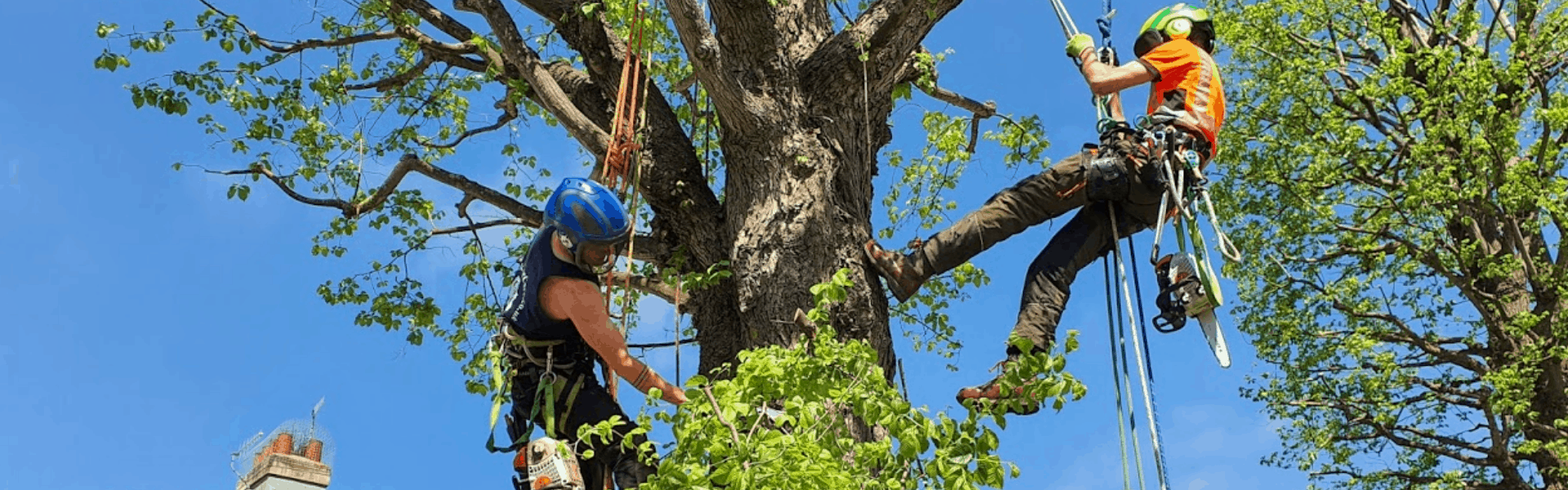 arborist certification study guide pdf